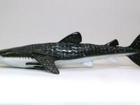 現生する最大の魚です。1/35でも結構なサイズです。