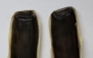 ジンベエザメ 影色で口の中を塗装