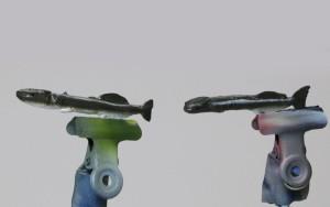 コバンザメ の塗装